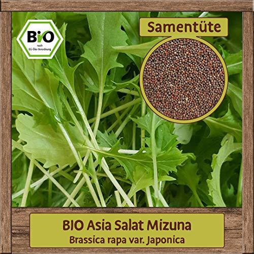 Samenliebe 1g BIO Asia Salat Samen Mizuna Brassica rapa var. Japonica Winter-Salat Gemüse-Samen Saatgut für ca. 3m²