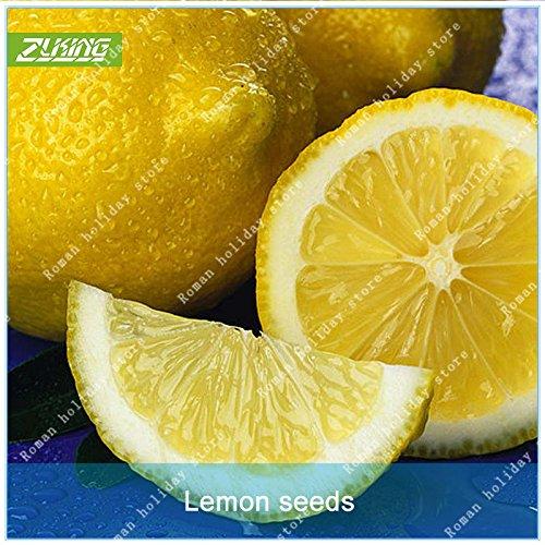 ZLKING 40 Pcs jaune citron Bonsai fruits chinois graines fraîches non-OGM organique facile à cultiver Haute Germination Prix Graines Plante
