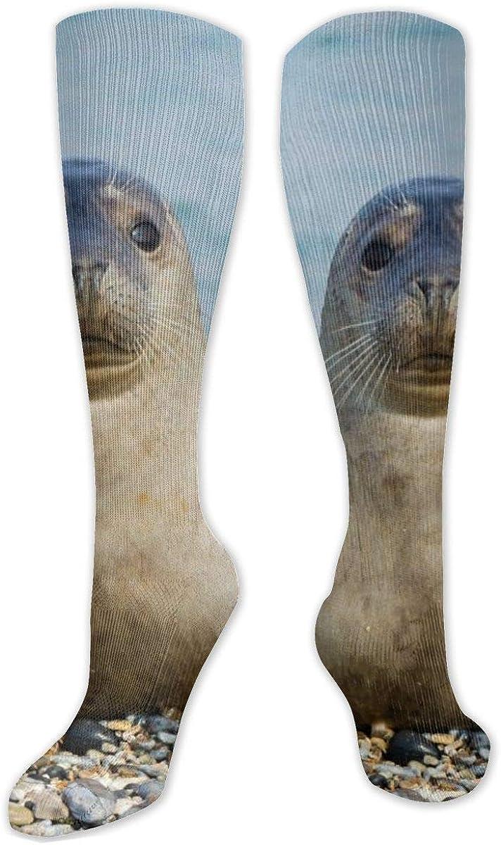 Seal On Lake Knee High Socks Leg Warmer Dresses Long Boot Stockings For Womens Cosplay Daily Wear