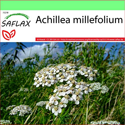 SAFLAX - Garden to Go - Achillea millefoglie - 200 semi - Achillea millefolium