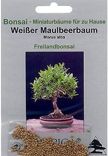 Ficus religiosa 200 semi di bobaum 90061 bohdhibaum BONSAI