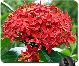 Mouse Pad - Flower Red Plant Ixora Costa Rica