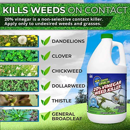 Organic Dandelion Killer