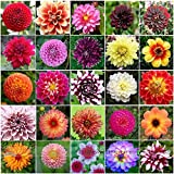 Pinkdose2018 Mixed 25 Arten von Hardy Hitzebeständige Verschiedene Mehrjährige Dahlie Blumensamen
