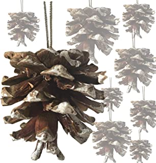 BANBERRY DESIGNS White Tipped Pinecones - Approx. 60 (2 Bags) Real Pine Cone Ornaments Assorted Sizes - Frosted Tips Strings - Rustic Natural Pinecones Bulk - Fall Christmas - 1.5 Inch to 2.5 Inch
