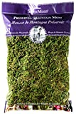 SuperMoss (23802) Mountain Moss Preserved, Fresh Green, 8oz