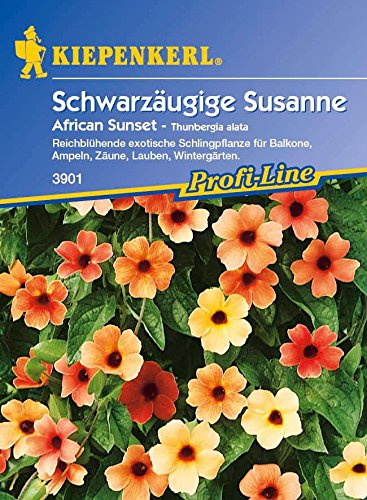 Kiepenkerl Schwarzäugige Susanne African Sunset