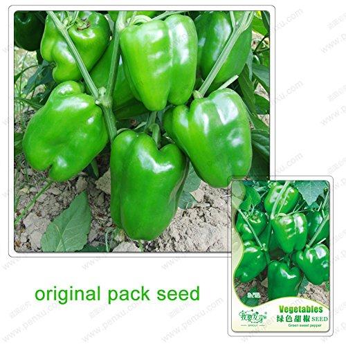 40 graines/Paquet, graines de poivrons verts, balcon en pot chili légumes, graines Paprika