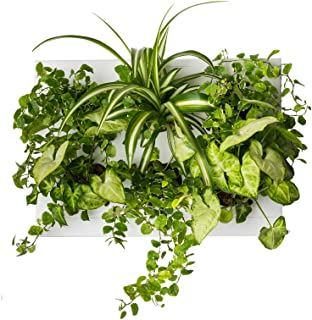 Ortisgreen Hang.Oasi.Home - Indoor Vertical Garden, Contains 1 White Planter Unit, Design Your Own Living Wall With Vertic...