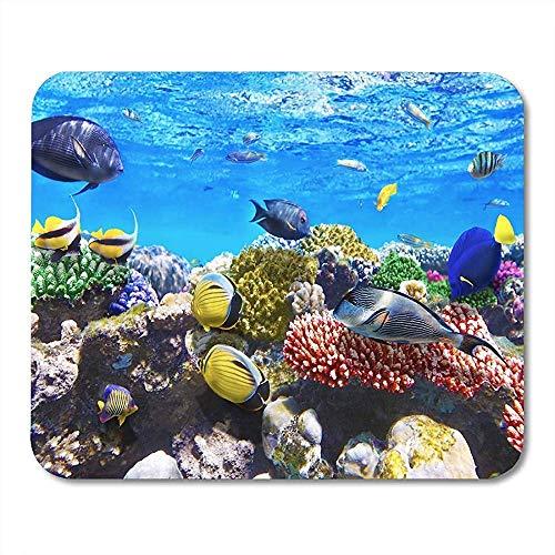 Alfombrilla de ratón Acuario Coral y Peces en el Mar Rojo Egipto Buceo Hurghada Bajo