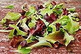 2000 semillas orgánicas mezclum de mezcla, las Lechuga, mezcla de ensalada gourmet