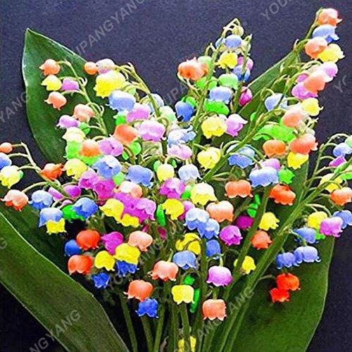 200 pcs/sac Muguet Graines de fleurs de Bell Orchid Seeds Rich Aroma Bonsai Balcon fleurs pour la maison rouge Plantes en pot