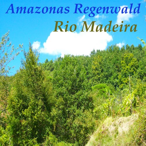 Amazonas Regenwald