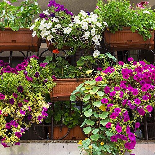 Balcón Semillas de mezcla de plantas