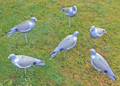 Nitehawk - Lockvogel Taube für die Jagd - Vollkörper bemalt - 12 Stück