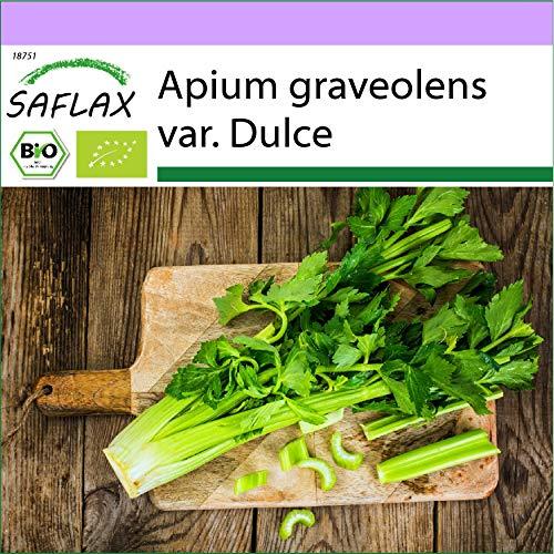 SAFLAX - BIO - Stangensellerie - Tall Utah - 500 Samen - Apium graveolens