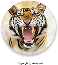 Young Panthera Tigris Altaica Growling in Angry Manner Portrait of a Young Large Cat,Absorbent Ceramic Coasters For Drinks Multicolor,3.9×0.2inches(8PCS),Make Your Home Decor Style