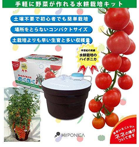 協和ハイポニカホームハイポニカプクプク水耕栽培キットMJA068