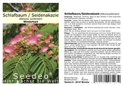 Seedeo® Seidenakazie/Schlafbaum (Albizzia julibrissin) 50 Samen