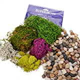 Ellie Arts | Natural Decorative Bag of Mixed Pebbles | Small Rocks | Stones | with Colorful SuperMoss for Fairy Gardens, Air Plants, Cactus, Terrariums, Succulents and more.