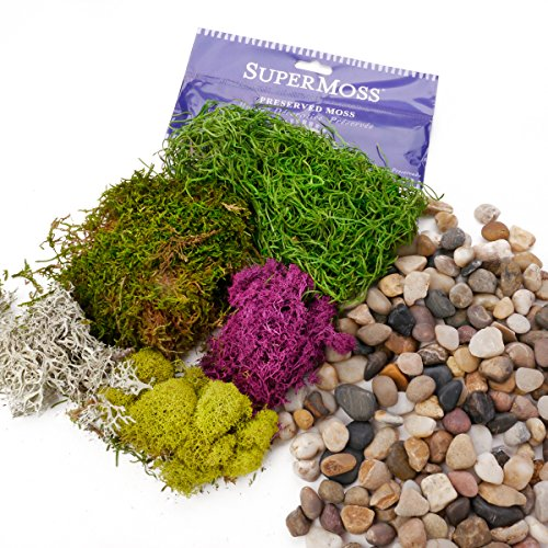 Ellie Arts   Preserved SuperMoss, Fresh, Spanish, Green with other Hues and Colors, Reindeer, Chartreuse Mix Bundled with Natural River Rocks, Pebbles, Decorative Stones.