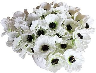 Best white poppy flower Reviews