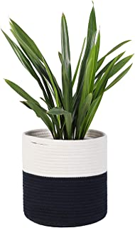 Best white stripe peace lily Reviews
