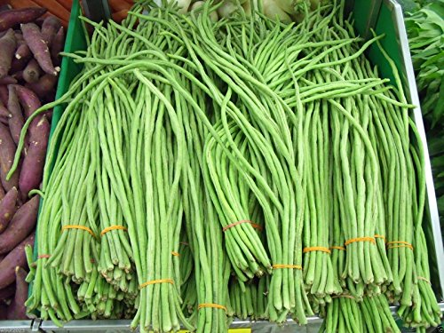Yardlong Lot de 100 graines de haricots (asperges, haricot de serpentin, haricot long)