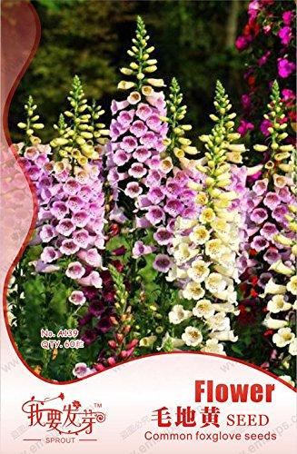 , 100 Best Mixed Seeds Cactus Flower, la forme géante, tolérante à la chaleur Plante vivace Succulent