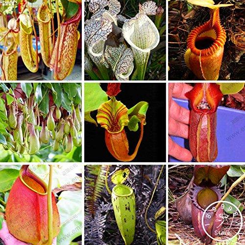 1bag = 20pcs graines vente de courgettes chaudes citrouille rare CHINOIS NO-OGM graines mini légumes délicieux bonsaï maison jardin