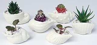 6 PCS Set 2.9-3.9 inch Ocean Seashell Shaped Ceramic Pot Succulent Planter/Succulent Cactus/Plant Pot/Flower Pots/Planter/Container/Succulent Pot/with A Hole for Home Garden Office Desktop Decoration