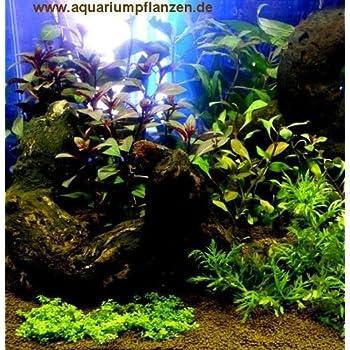 400 L Aquarium Set Pflanzen Deko Kies Xxii Amazon De Garten