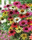 Aimado Seeds Garden-50 Pcs Marguerites 'Papillon' en mélange graines,élégante floraison en bonnets de grand-mères multicolores Plante vivace pour Jardin