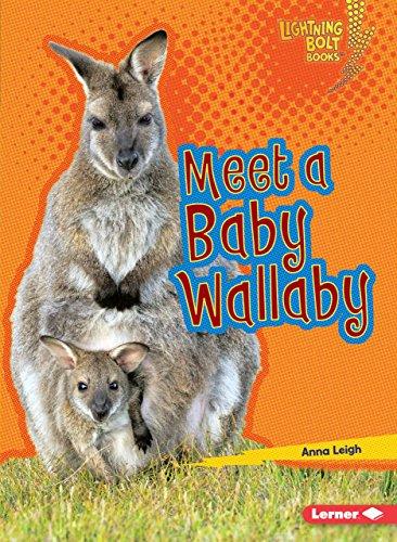 Meet a Baby Wallaby (Lightning Bolt Books ® ― Baby Australian Animals)