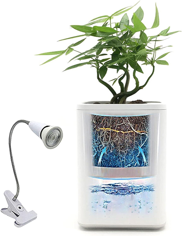 MIAE Macetas para Plantas de Interior, con Sistema de riego y Drenaje automático, Maceta Violeta Africana, para Jardines de alféizar de Ventanas Interiores y Exteriores