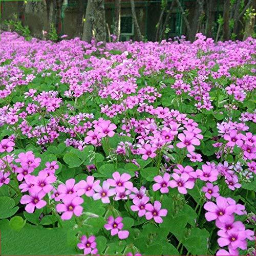 Eantpure Pflanzen für Balkon und...