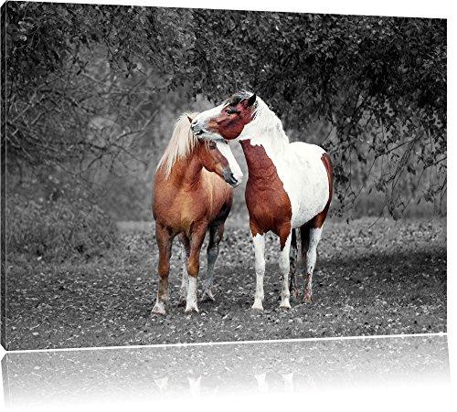 Pixxprint Zwei schmusende Pferde als Leinwandbild | Größe: 80x60 cm | Wandbild | Kunstdruck | fertig bespannt