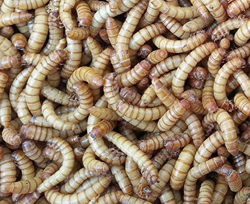 Allterra Mehlwürmer, lebend, 1 kg