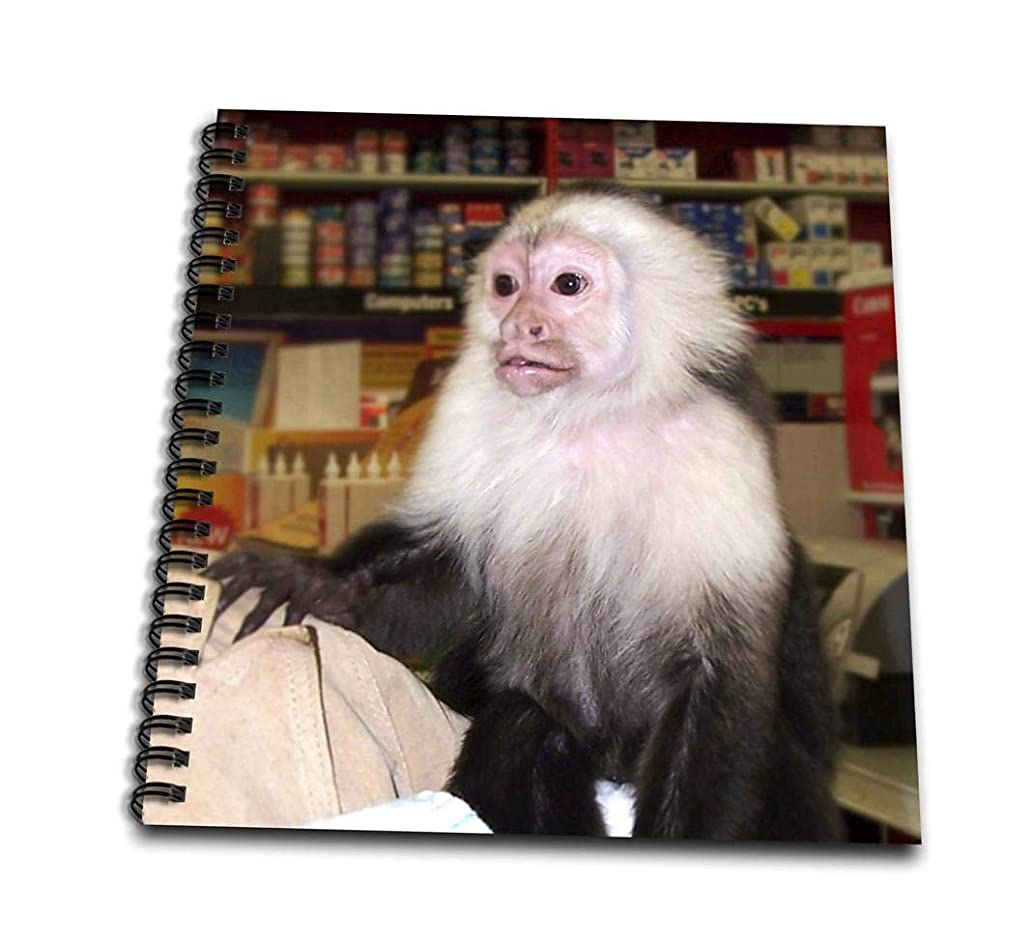 3dRose db_155919_1 Capuchin Monkey in Store Photograph Drawing Book, 8 by 8-Inch
