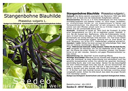 Seedeo® Stangenbohne 'Blauhilde' (Phaseolus vulgaris L.) 30 Samen BIO