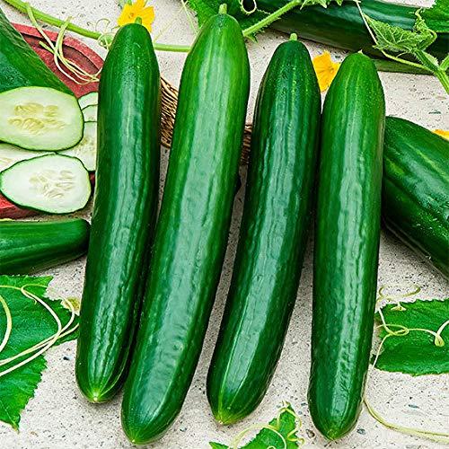 AIMADO Samenhaus-Rariät 10 Stück Schwammgurke Samen exotische pflanzen Saatgut aus Südamerika, Gemüse Bio Kletterpflanze Früchte essbar für Ihre Garten