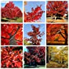 IDEA HIGH Seeds-5pcs albero di quercia rossa semenzale buon paesaggio bonsai albero quercus alba ombra ghianda seedss pianta per giardino domestico fai da te: MISTO #3
