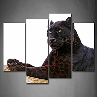 Best panther dog picture Reviews