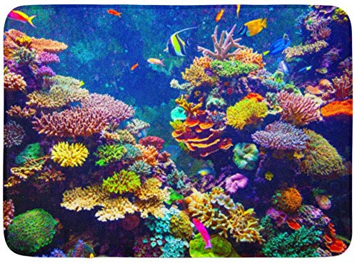 LXJ-CQ Fußmatten Bad Teppiche Fußmatte Rot Fidschi Korallenriff und Tropische Fische im Sonnenlicht Singapur Aquarium Blue Sea 19,5