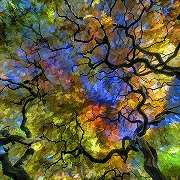 Starlight Grove
