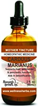 Carduus Marianus Q - Mother Tincture - Supports Liver, Gallbladder & Pancreatic Function. Aids in Detoxification. 2.0 Fl Oz - Made in USA (Alcoholic Extract)