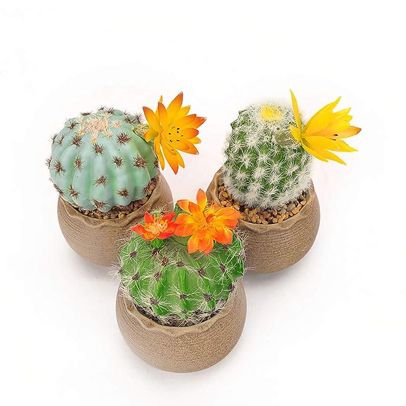 BEGONDIS Set of 3 Artificial Cactus Succulents Plants in Ceramic Pots, Assorted Green Decorative Faux Succulent Mini Cacti
