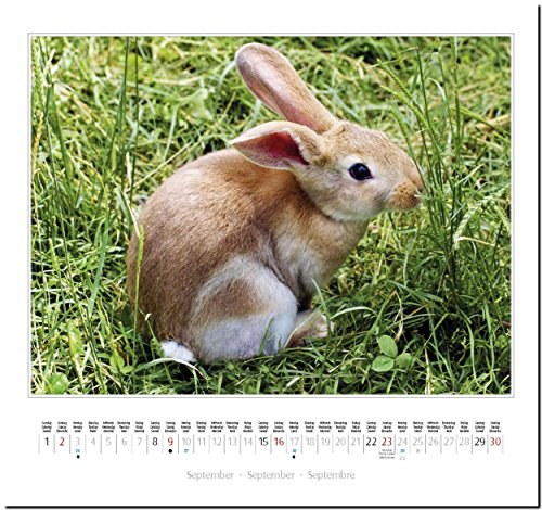 KANINCHEN: Original Stürtz-Kalender 2018 – Mittelformat-Kalender 33 x 31 cm - 11