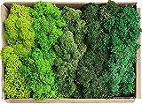 Islandmoos - Moos in 5 versch. Farben 250gr / 500 gr / 1Kg echtes konserviertes Natur Moos zum Moosbild basteln Deko und Modellbau (Musterbox, 150)