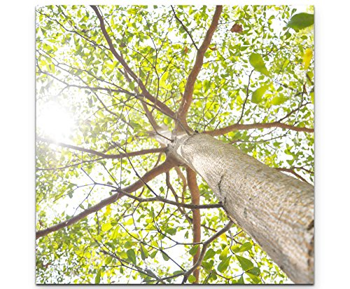 Paul Sinus Art Leinwandbilder | Bilder Leinwand 60x60cm Baumkrone im Sonnenlicht